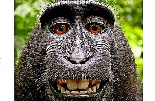 Ein Affe verliert vor Gericht