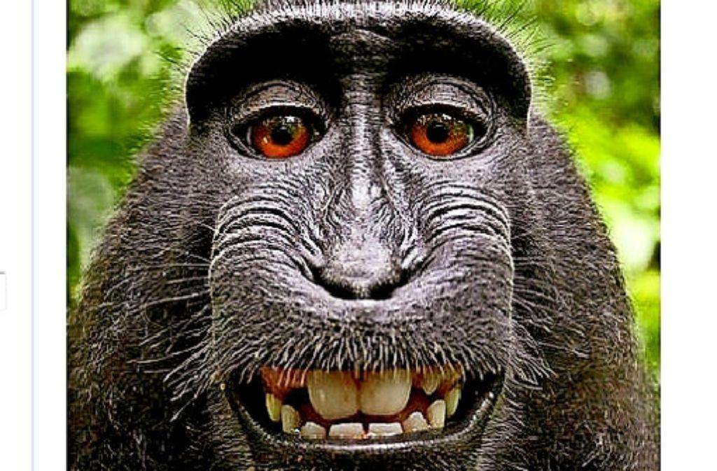 Witziges Selfie: einige von Narutos Fotos gingen um die Welt. Foto: Wikimedia