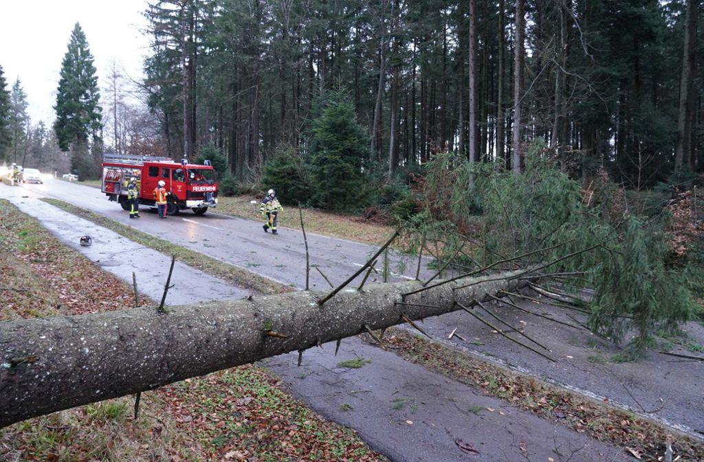 Viele Bäume stürzten wegen des Orkans um oder sind beschädigt. Foto: Andreas Rosar Fotoagentur-Stuttg