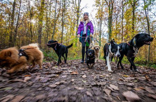 Hundeexperten  begrüßen Pflicht zum  Auslauf