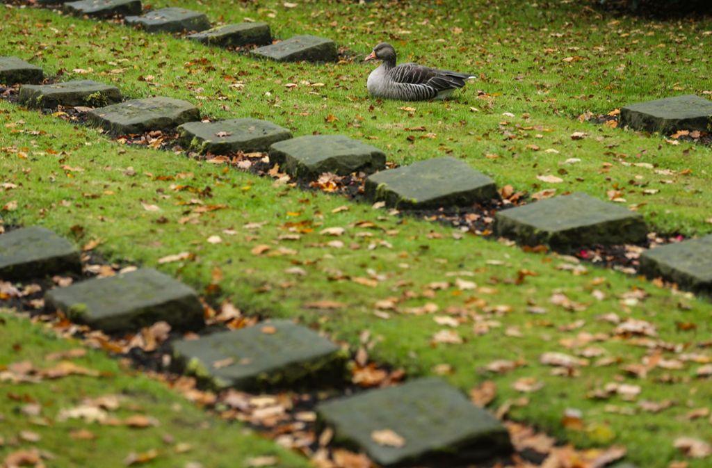 Gräber auf dem Friedhof Ohlsdorf. Foto: dpa/Ulrich Perrey