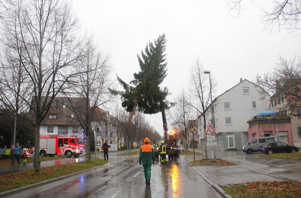 weihnachtsbaum in stuttgart weilimdorf ein tannenbaum. Black Bedroom Furniture Sets. Home Design Ideas