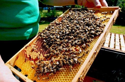 Den Bienen fehlt die Blütenpracht