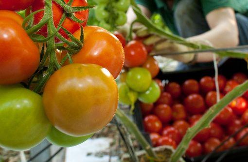 Auf dem Grab der Freundin Tomaten gepflanzt