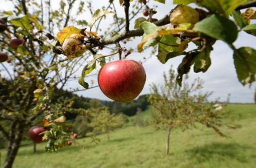 Darum sind Äpfel momentan so teuer