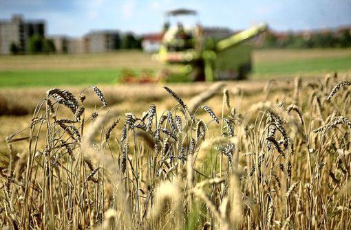 Der gute Boden verhindert große Ernteausfälle
