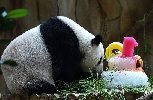 Eine Eistorte für Panda-Dame Liang Liang