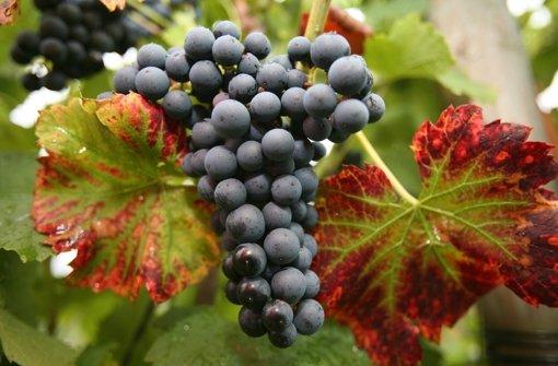 Vom König der Rotweine und filigranen Weißen