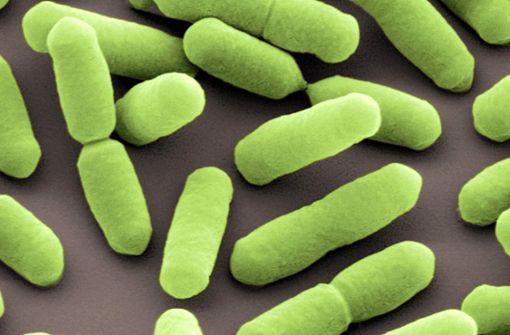 Niederländische Firma ruft wegen Listerien weitere Wurstwaren zurück