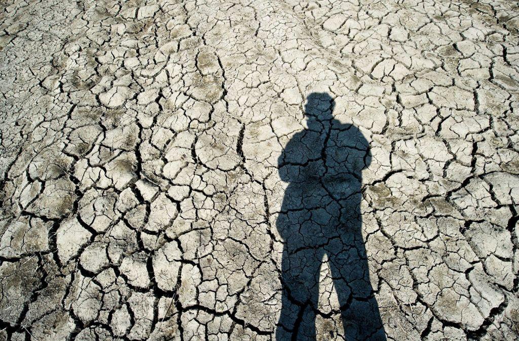 Die wochenlange Dürre verdirbt vielen Bauern im  Norden und Osten die Ernte. Foto: dpa-Zentralbild