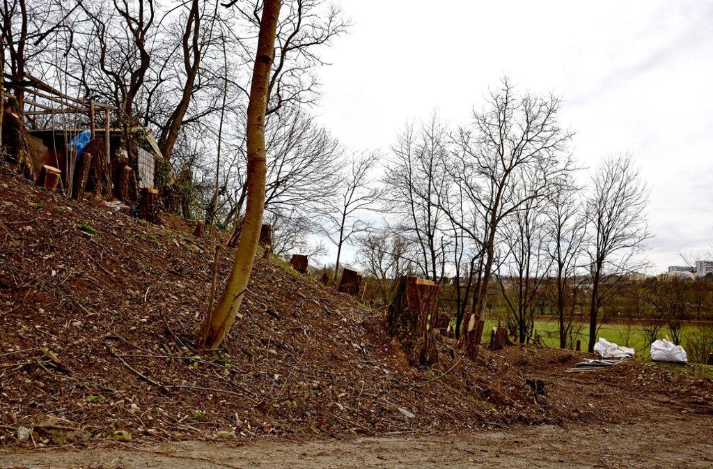 Einige der Robinien wurden auf dem Gelände hinter dem Golfplatz gefällt. Hier werden stattdessen Eiche, Ahorn und Hainbuche gepflanzt, um das Biotop zu erweitern. Foto: Schumacher