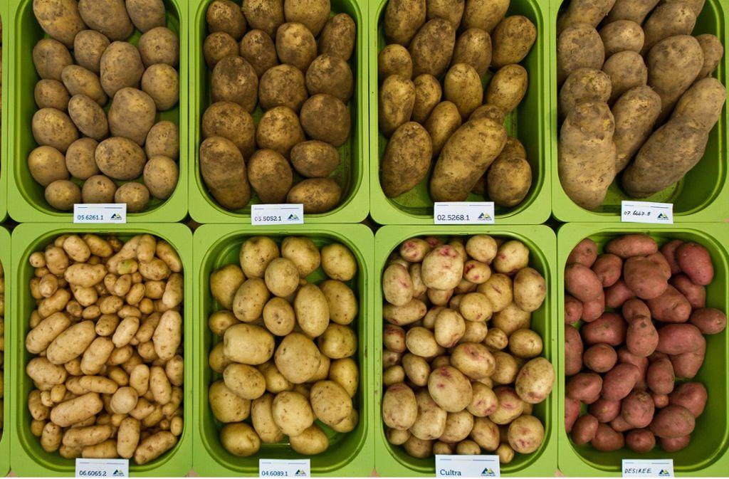 In Deutschland gibt es dieses Jahr weniger Kartoffeln. Foto: dpa