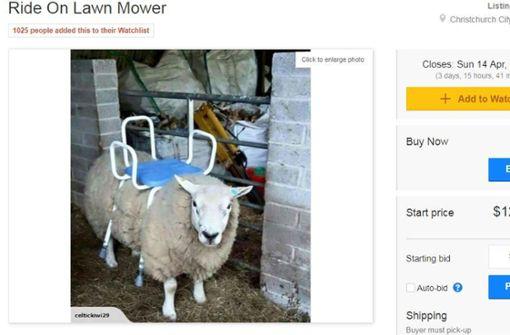 Neuseeländer will Schaf als Sitz-Rasenmäher verkaufen