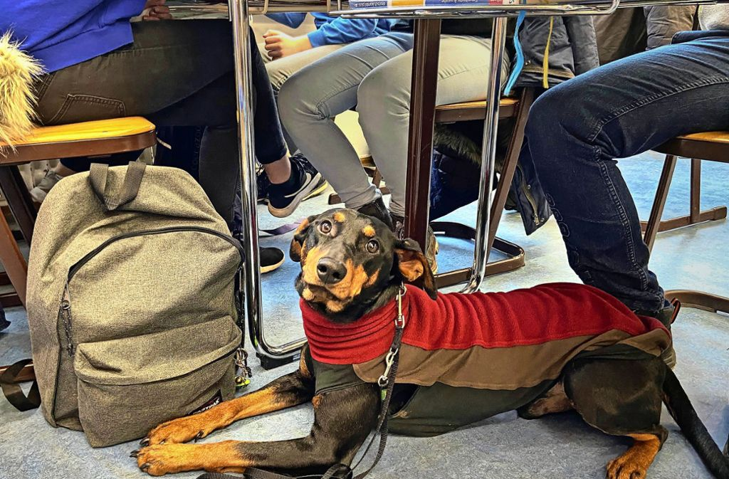 Schulhund Ares macht auch im Unterricht eine gute Figur. Foto: /Michael Steinert