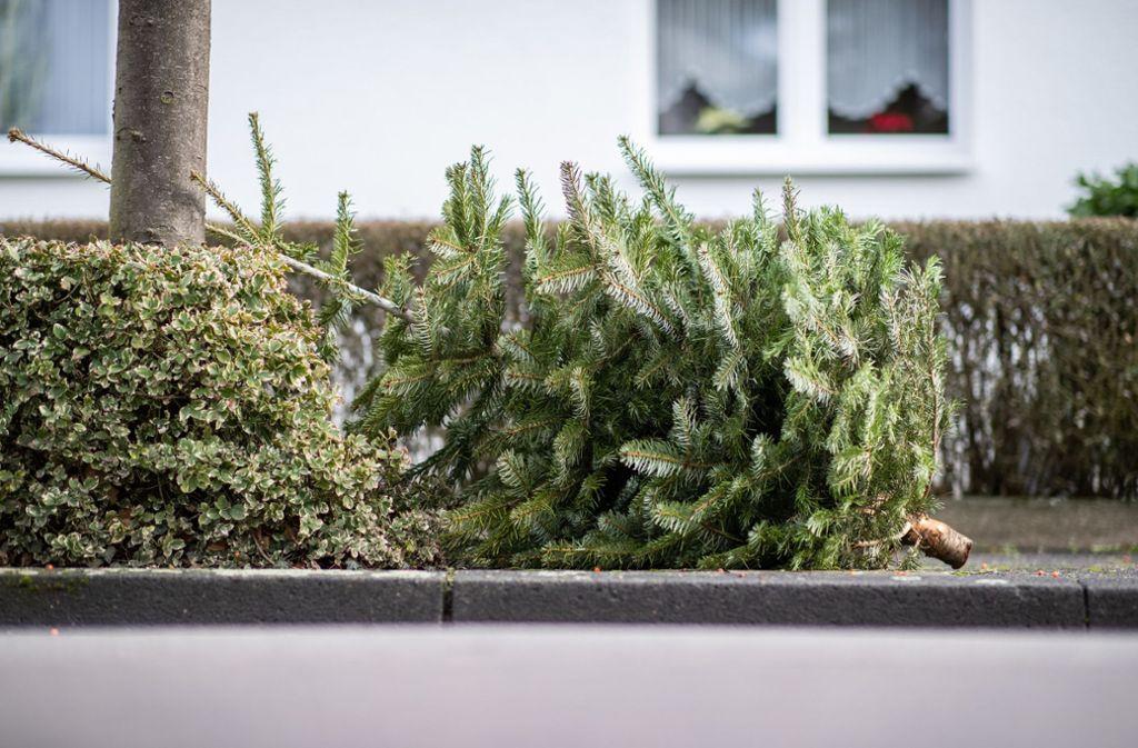 Gestank statt Tannenduft: Für die beschmierten Bäume dürfte sich nun kaum jemand interessieren (Symbolbild). Foto: dpa/Marcel Kusch