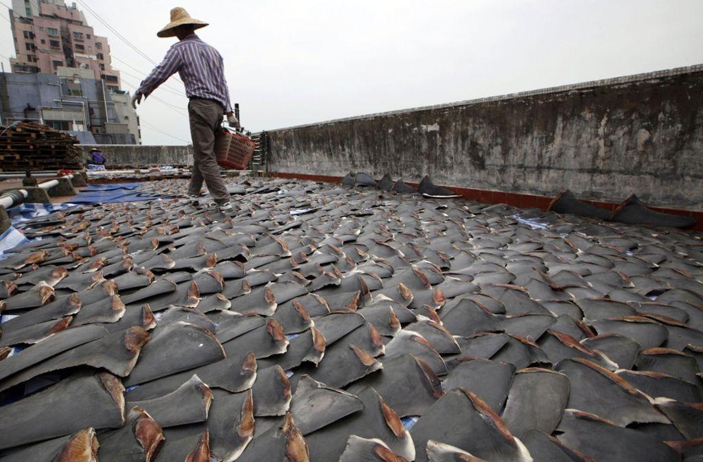 Ein Arbeiter sammelt im chinesischen Hongkong Haifischflossen, die auf dem Dach einer Fabrikhalle getrocknet wurden. Foto: Kin Cheung/AP/dpa