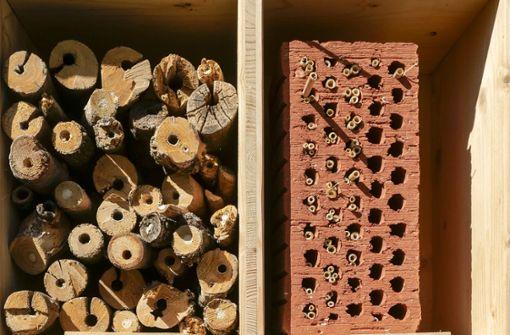 Ein Garten für Wespe, Biene und Co.