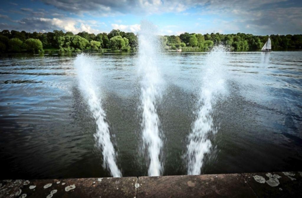 Am Max-Eyth-See in Stuttgart waren zahlreiche Fische umgekommen. Foto: Lichtgut/Achim Zweygarth