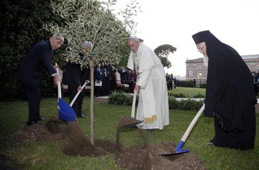 Schimon Peres, Mahmud Abbas, Papst Franziskus und Patriarch Bartholomäus (von links) pflanzen gemeinsam einen Olivenbaum als Zeichen des Friedens. Foto: dpa