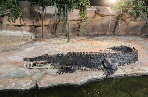 Krokodil-Koloss in der Wilhelma eingetroffen