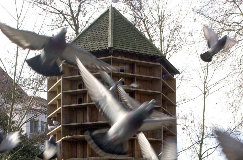 Bisher spricht sich die Stadt gegen den Bau eines Taubenhaus in Leinfelden aus. Foto: Bernd Weißbrod /dpa