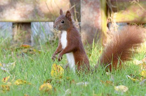 So helfe ich einem Eichhörnchen in Not