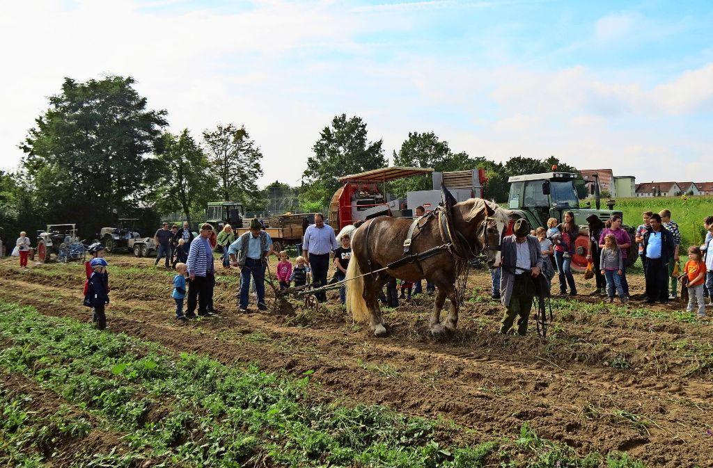 Beim Filder-Feldtag vor vier Jahren in Harthausen war auch eine Kartoffelernte wie früher angesagt. Foto: Archiv Otto-H. Häusser