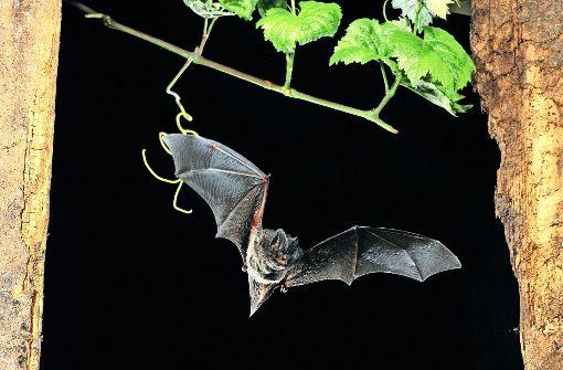 Geballte Werbung für die Artenvielfalt