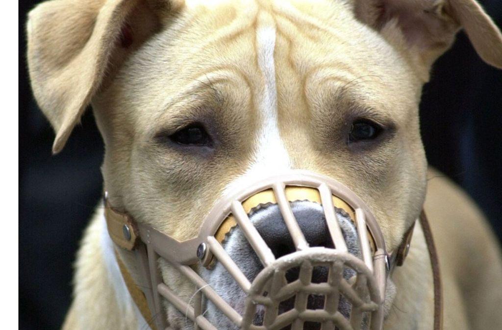 Die beiden Hunde, die in Leimen einen Jugendlichen angegriffen haben, sind laut Gentest Kampfhunde. Sie trugen bei der Attacke keinen Maulkorb. (Symbolfoto) Foto: dpa/dpaweb