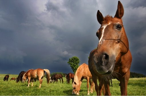 Glückliche Pferde: Foto: dpa
