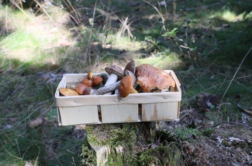 Was es beim Pilzesammeln zu beachten gilt