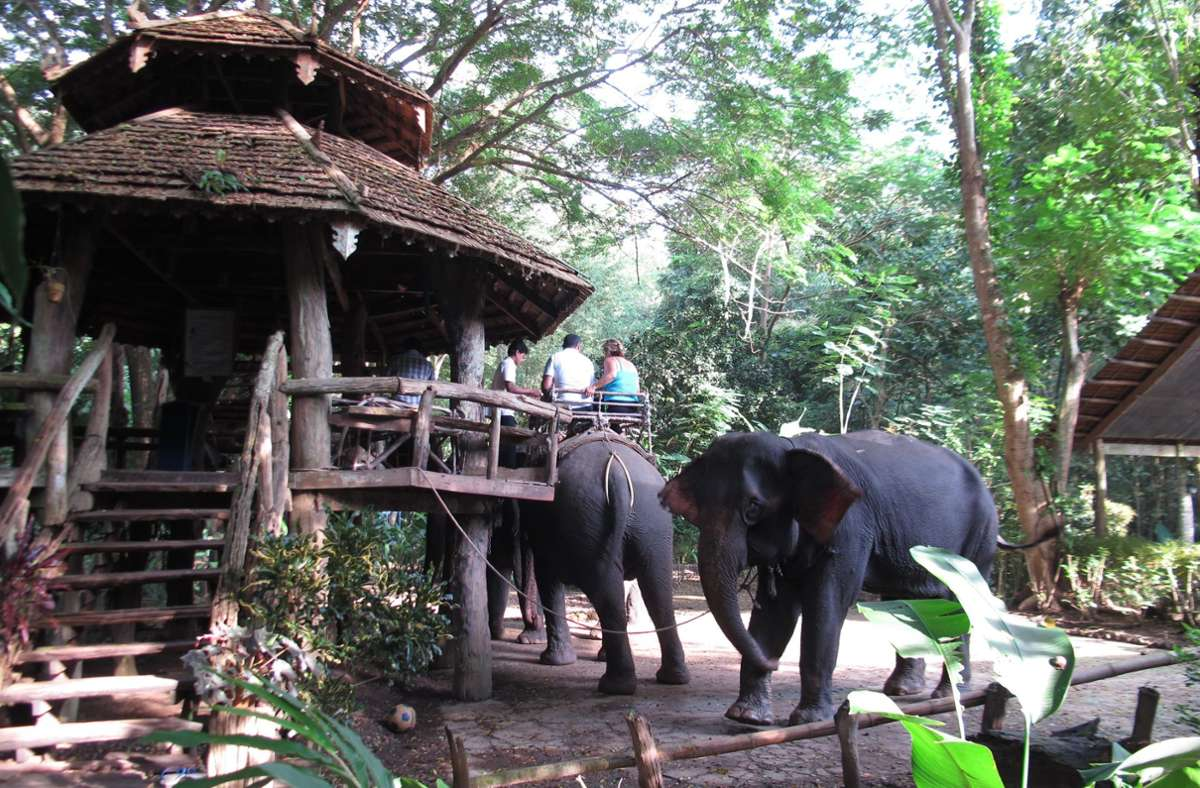 Touristen und freiwillige Helfer können im Park lernen, wie Elefanten artgerecht behandelt werden. Foto: dpa