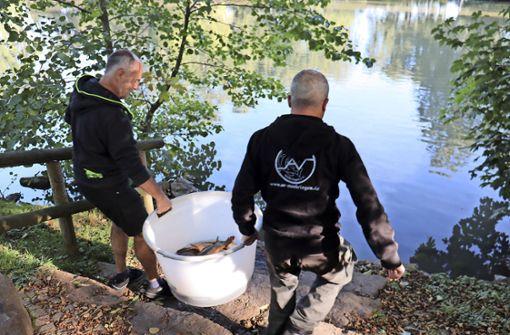 Die Fische sind zurück im Riedsee