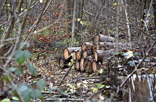 Am Stadtwald zerren viele Interessen