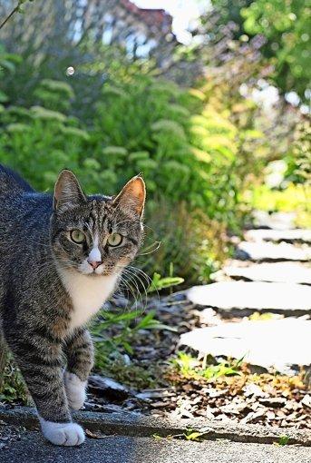 Sorge um Katzen