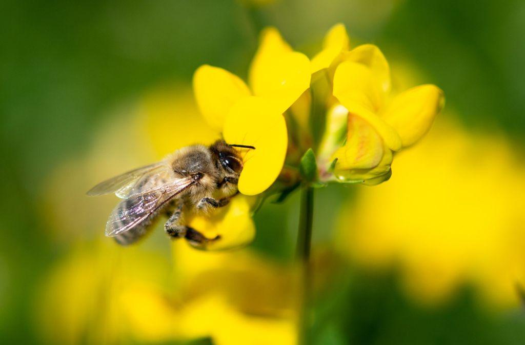 """Unter dem Motto """"Rettet die Bienen"""" hatten Naturschützer drei Wochen lang Unterschriften für das Volksbegehren gesammelt. Foto: dpa/Fabian Sommer"""