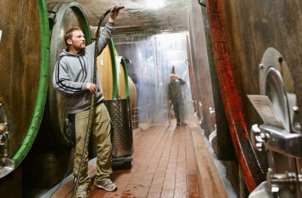 Weinkeller statt Designerstudio: Moritz Haidle bewässert die alten Holzfässer, damit diese nicht austrocknen – im Hintergrund Seniorchef Hans Haidle Foto: Gottfried Stoppel