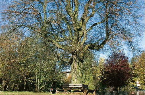 Ein Baum für den Frieden