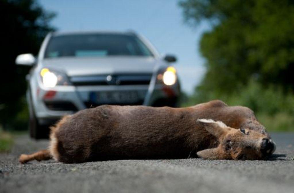 Nach einem Unfall in Schwaikheim hat ein Autofahrer ein verletztes Reh einfach liegen gelassen. Foto: dpad/Symbolbild