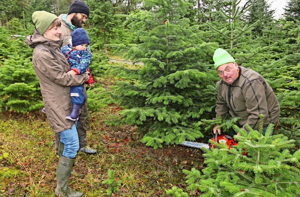 Die Christbäume pflanzt und zieht Roland Schäuffele (rechts) selbst. Foto: Andreas Gorr