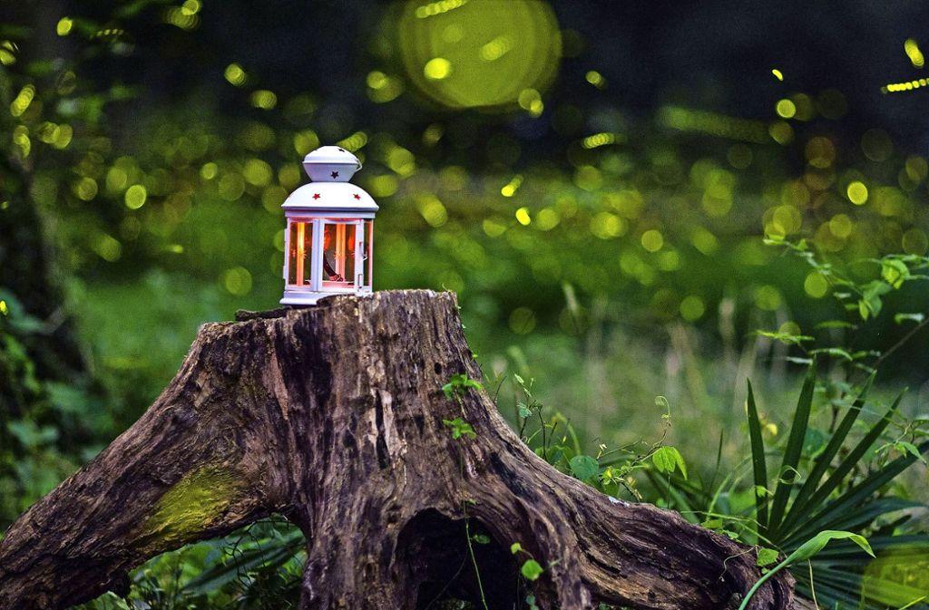 Für den Menschen sind Glühwürmchen ein romantischer Hingucker. Die Käfer leuchten aber aus einem ganz bestimmten Grund. Foto: dpa