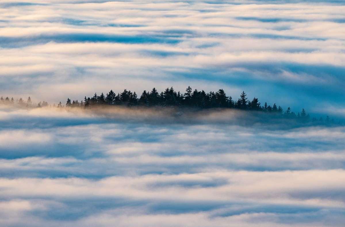 Zusammen mit einer Reisegruppe möchte die Seniorin in den Bayerischen Wald fahren. Foto: dpa/Armin Weigel