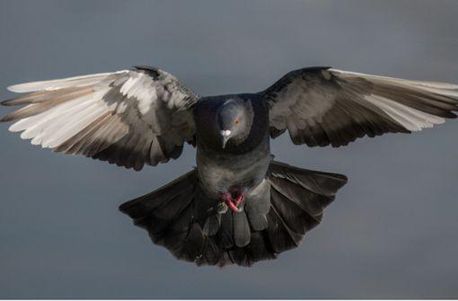Unbekannte töten Vögel mit Schusswaffe – Polizei sucht Zeugen