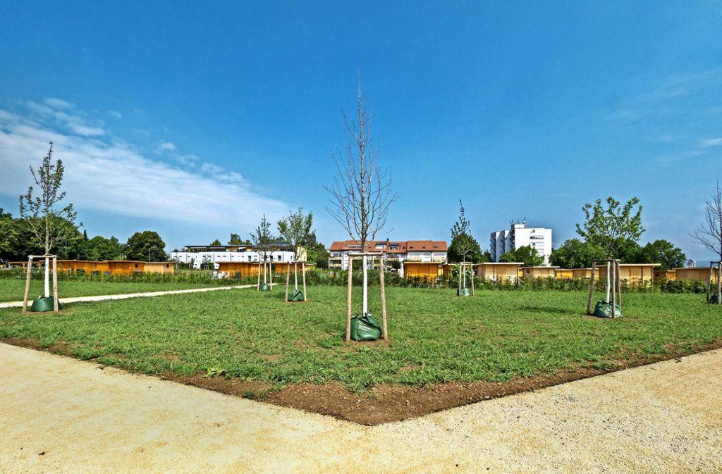 Junge Bäume, lichte Hecken:  Ein Teil des Geländes am Römerhügel soll Naherholungsgebiet für alle sein. Foto: factum/Weise