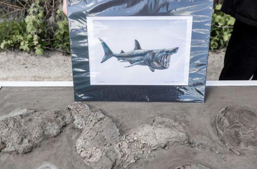 Zehn-Meter-Hai aus der Urzeit entdeckt