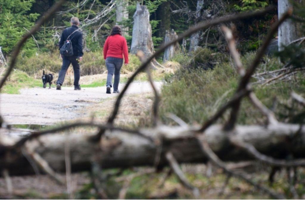 In einem Nationalpark ohne Teilung könnten sich nicht nur Besucher ungestörter bewegen. In der Bilderstrecke zeigen wir die Geschichte des Nationalparks Nordschwarzwald. Foto: dpa