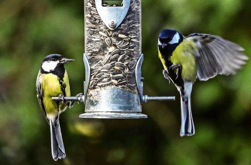 Warum man Vögel füttern sollte