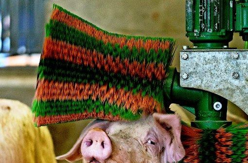 Big Brother im Schweinestall