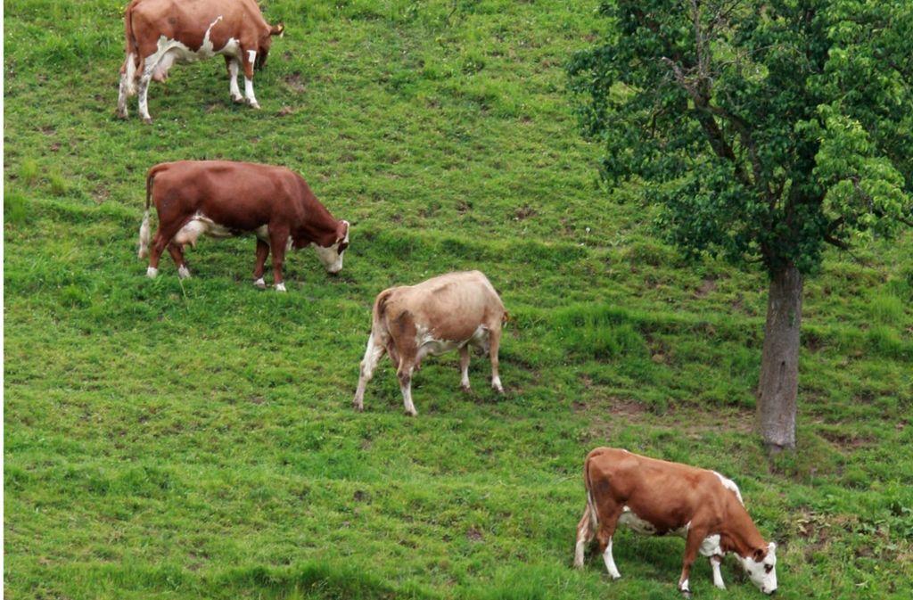Im Schwarzwald und im Allgäu dient die Weideviehhaltung dem Naturschutz. Foto: dpa