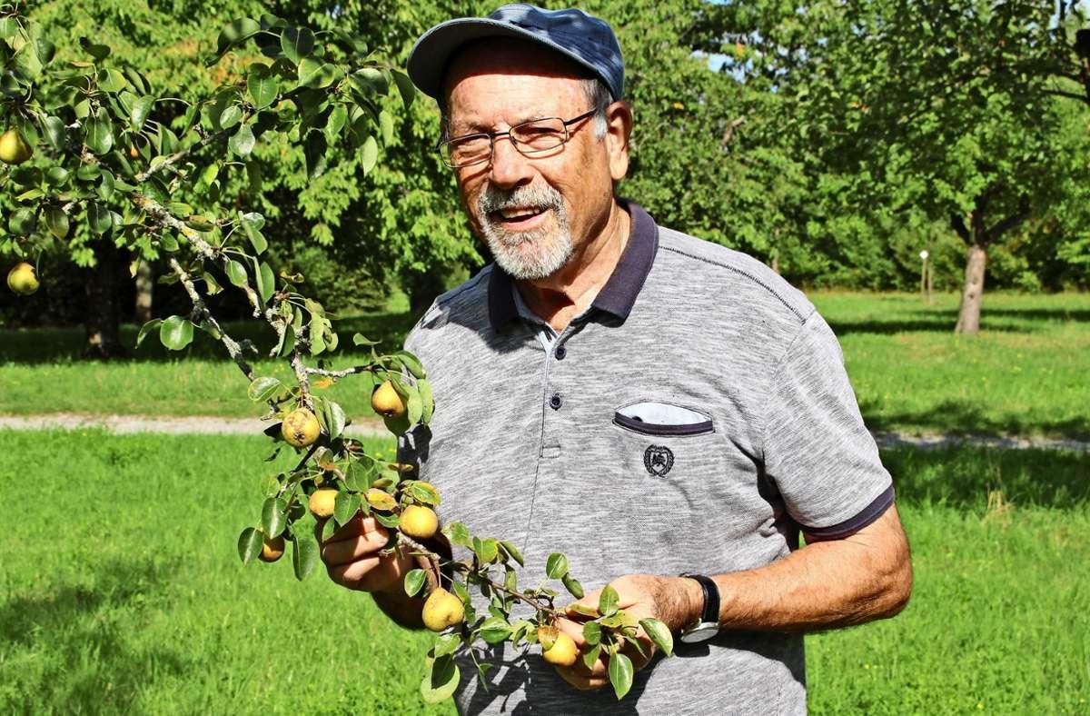 Walter Hartmann zeigt  einen Zweig der Palmischbirne. Foto: Caroline Holowiecki